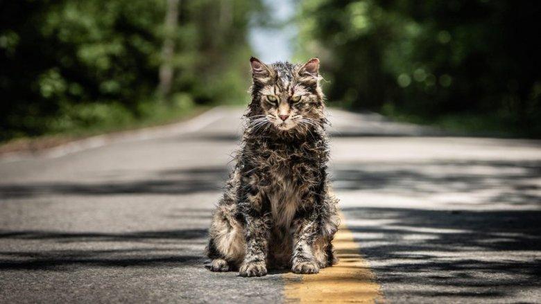 Leo the cat as Church in Pet Sematary (2019)
